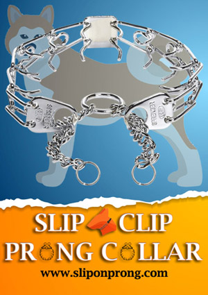 Slip and Clip Prong Collar for Akita