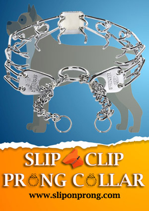 Slip and Clip Prong Collar for Boxers