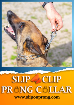 Slip and Clip Prong Collar